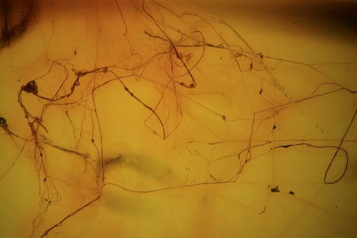 Fossil Spider Web In Baltic Amber - Rare!