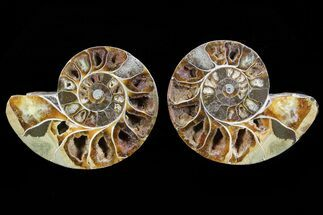 "3.6"" Cut & Polished Ammonite Pair - Anapuzosia? For Sale, #72956"