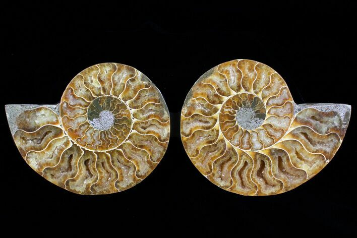 "4.4"" Cut & Polished Ammonite Pair - Agatized"
