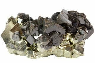 Sphalerite & Pyrite - Fossils For Sale - #72603