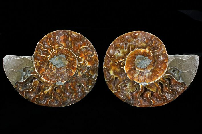 "4.9"" Cut & Polished Ammonite Pair - Agatized"