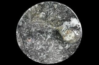 "4.2"" Round Fossil Goniatite Dish For Sale, #73718"