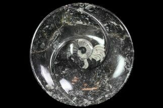 "6.3"" Round Fossil Goniatite Dish For Sale, #74006"