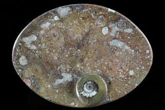 "Buy 7.7"" Oval Shaped Fossil Goniatite Dish - #73771"