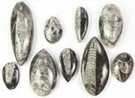 Wholesale Lot: Polished Orthoceras Fossils Assorted Sizes - 100 Pieces - #77278-3