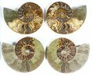 "Wholesale: 6 to 7"" Cut Ammonite Pairs (Grade B/C) - 6 Pairs - #77332-3"
