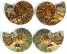 "Wholesale: 6 to 7"" Cut Ammonite Pairs (Grade B/C) - 6 Pairs - #77332-1"