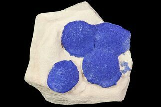 Brilliant Blue Azurite Sun Cluster On Rock - Australia For Sale, #77615