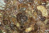 "12.2"" Composite Plate Of Agatized Ammonite Fossils - #77779-1"