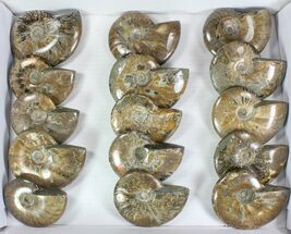 "Wholesale: 4 - 5"" Whole Polished Ammonites (Grade B/C) - 15 Pieces For Sale, #77759"