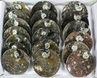 "Wholesale Lot: 4-1/2"" Round Fossil Stoneware - 37 Pieces - #77644-1"