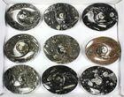 "Wholesale Lot:  5"" Fossil Orthoceras Stoneware Dishes - 26 Pieces - #77756-1"