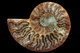 "3.4"" Agatized Ammonite Fossil (Half)  For Sale, #78407"