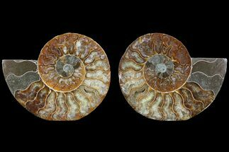 "Buy 4.4"" Cut & Polished Ammonite Pair - Agatized - #78550"