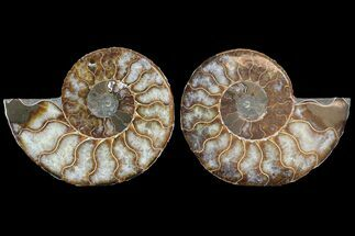 "Buy 4.3"" Cut & Polished Ammonite Pair - Agatized - #78556"