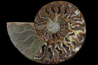 "5"" Agatized Ammonite Fossil (Half) - Crystal Lined Chambers For Sale, #78596"
