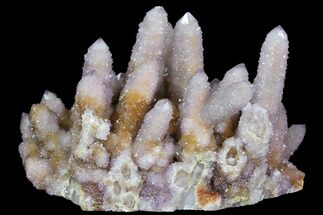 "5.5"" Cactus Quartz (Amethyst) Cluster - South Africa For Sale, #78659"