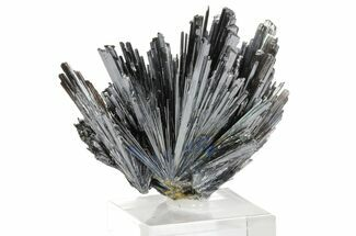 "Buy 2.7"" Metallic Stibnite Spray - Herja Mine, Romania - #78853"