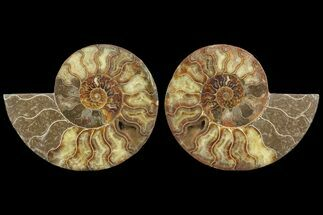 "7.15"" Cut & Polished Ammonite Pair - Agatized For Sale, #78329"