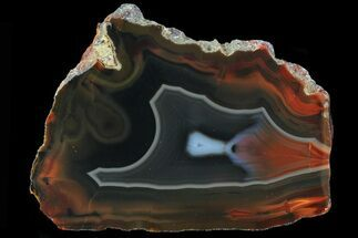 "Buy 2.9"" Beautiful Condor Agate From Argentina - Slab - #79513"