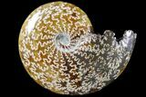 "4.1""  Polished, Agatized Ammonite (Cleoniceras) - Madagascar - #79743-1"