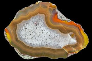"Buy 3"" Beautiful Condor Agate From Argentina - Cut/Polished Face - #79507"