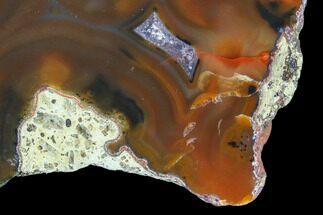 "Buy 2.8"" Beautiful Condor Agate From Argentina - Cut/Polished Face - #79582"