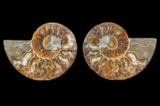 "3.1"" Cut & Polished Ammonite Pair - Agatized For Sale, #78401"