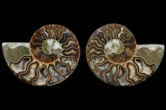 "3.15"" Cut & Polished Ammonite Fossil - Agatized For Sale, #78362"