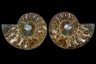 "3.6"" Cut & Polished Ammonite Fossil - Agatized For Sale, #78383"