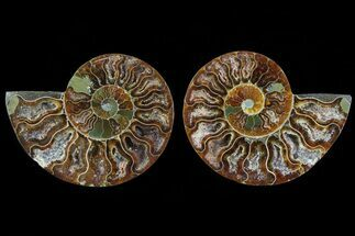 "Buy 3.3"" Cut & Polished Ammonite Fossil - Agatized - #78385"