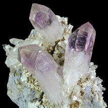 "1.9"" Amethyst Cluster - Las Vigas, Mexico  For Sale, #80543"