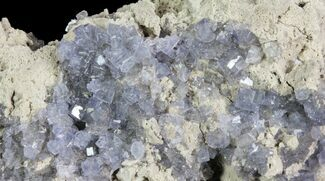 "3"" Purple/Gray Fluorite Cluster - Marblehead Quarry Ohio For Sale, #81188"