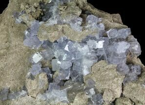 "Buy 2.2"" Purple/Gray Fluorite Cluster - Marblehead Quarry Ohio - #81199"