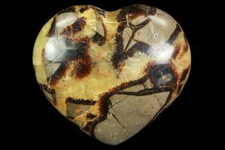 Septarian - Fossils For Sale - #82017