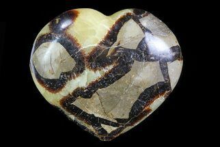 Septarian - Fossils For Sale - #82044