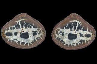 "Buy 4.25"" Cut Septarian Nodule - Morocco  - #82162"