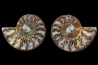 "3.2"" Cut & Polished Ammonite Pair - Agatized For Sale, #82334"