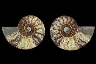 "3.2"" Cut & Polished Ammonite Pair - Agatized For Sale, #82337"