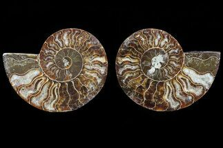 "Buy 3.6"" Cut & Polished Ammonite Pair - Agatized - #82324"