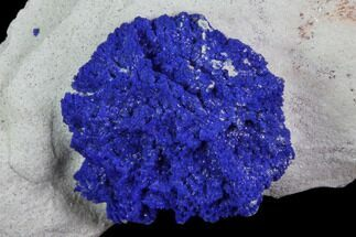 Azurite - Fossils For Sale - #82713