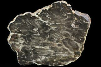 "10"" Jurassic Petrified Wood (Pentoxylon) End Cut - Australia For Sale, #82766"