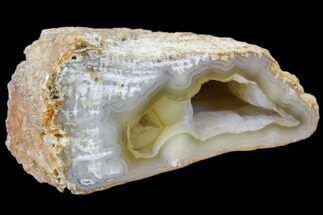 "3.2"" Agatized Fossil Coral Geode - Florida For Sale, #82990"