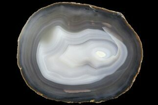 "Buy 7"" Polished Brazilian Agate Slice - #85195"