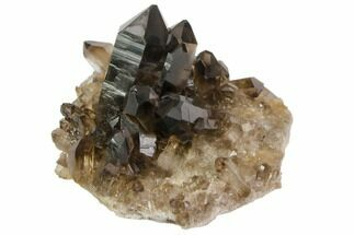 "Buy 2.7"" Dark Smoky Quartz Crystal Cluster - Brazil - #84814"