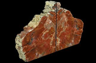 "8"" Tall, Colorful Arizona Petrified Wood Bookends - Red For Sale, #86195"