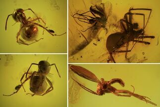Detailed Fossil Flies, Ant & Spider In Baltic Amber For Sale, #87248