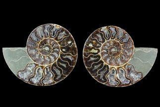 "4.55"" Cut & Polished Ammonite Fossil - Agatized For Sale, #88202"