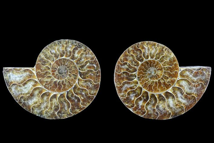 "4.1"" Cut & Polished Ammonite Fossil - Agatized"