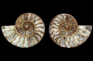 "Buy 4.35"" Cut & Polished Ammonite Fossil - Agatized - #88213"